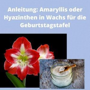 Anleitung Amaryllis oder Hyazinthen in Wachs für die Geburtstagstafel